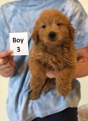Cindy Boy 3 pic 4 6-4
