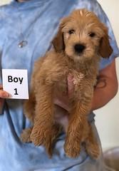 Belle Boy 1 pic 3 6-4