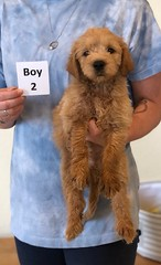 Belle Boy 2 pic 3 6-4
