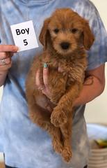 Belle Boy 5 6-4