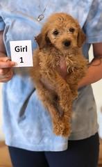 Belle Girl 1 pic 2 6-4