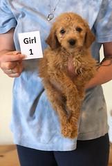 Belle Girl 1 pic 3 6-4