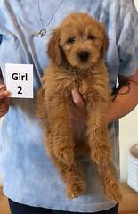 Belle Girl 2 pic 2 6-4