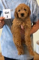 Belle Girl 2 pic 3 6-4