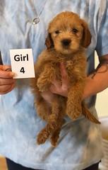 Belle Girl 4 pic 3 6-4