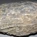 Syringoporid fossil coral (Chatham, Ohio, USA) 3