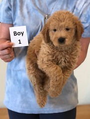 Cindy Boy 1 6-4