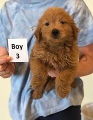 Cindy Boy pic 3 6-4