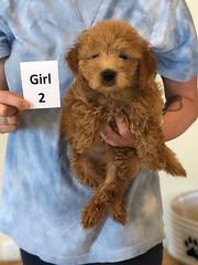 Cindy Girl 2 pic 3 6-4