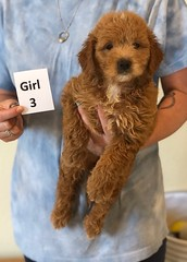 Cindy Girl 3 pic 4 6-4