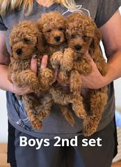 Georgie Boys 2nd set pic 3 6-4