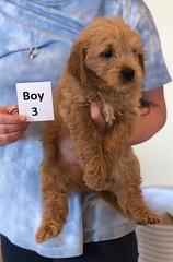 Belle Boy 3 6-4