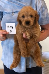 Belle Boy 3 pic 2 6-4