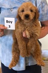 Belle Boy 3 pic 3 6-4