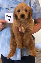 Belle Boy 3 pic 4 6-4