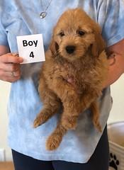 Belle Boy 4 6-4