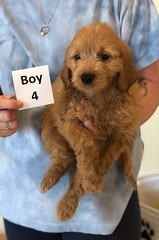 Belle Boy 4 pic 4 6-4