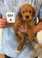 Belle Girl 4 pic 2 6-4