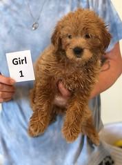 Cindy Girl 1 pic 3 6-4