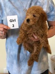 Cindy Girl 2 6-4