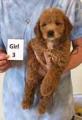 Cindy Girl 3 pic 3 6-4