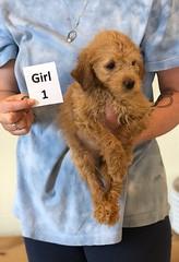 Belle Girl 1 pic 4 6-4