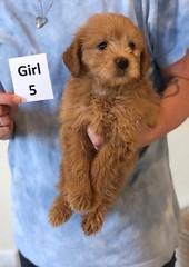 Belle Girl 5 6-4
