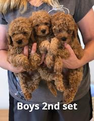 Georgie Boys 2nd set pic 4 6-4