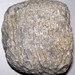 Syringoporid fossil coral (Chatham, Ohio, USA) 1