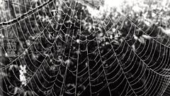 Spider wave