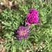 Pine cones and wild flowers