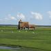 St Thomas Becket Church, Fairfield, Kent / Romney Marsh & Dungeness / 06-Jun 2021