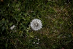 Day 157 - Weeds
