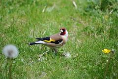 Day 158 - Birding