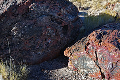 Colorful Fossilized Log Pieces in the Giant Logs Area (Petrified Forest National Park)
