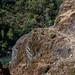 Rogue River Trail
