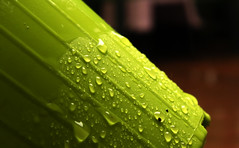 Rain on the green vase