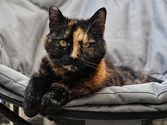 Day 160 Comfy Cat