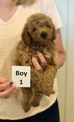 Georgie Boy 1 6-11