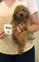 Georgie Boy 1 pic 3 6-11