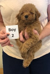 Georgie Boy 2 pic 2 6-11