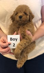 Georgie Boy 2 pic 4 6-11
