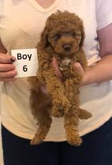 Georgie Boy 6 pic 3 6-11