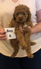 Georgie Boy 6 pic 4 6-11