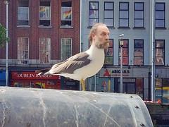 161/365 - birdbrain