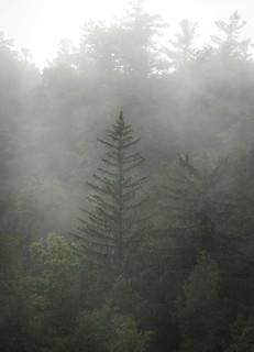 Mist & Rain