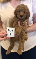 Georgie Boy 5 6-11