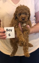 Georgie Boy 6 pic 2 6-11