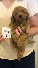 Georgie Boy 1 pic 4 6-11