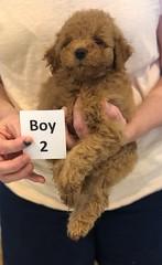 Georgie Boy 2 pic 3 6-11